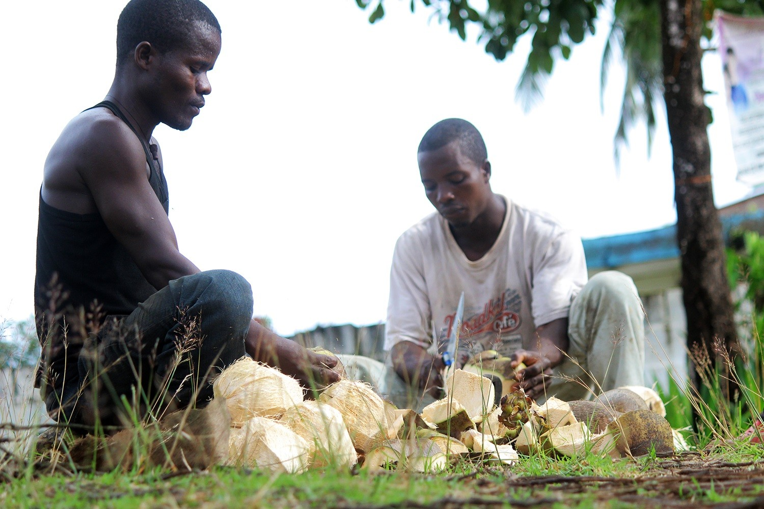 Making-coconut-oil-Liberia-photo